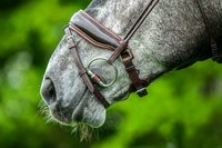 7 feitjes over de paardenmond (die jij nog niet wist!)